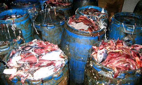 fish waste